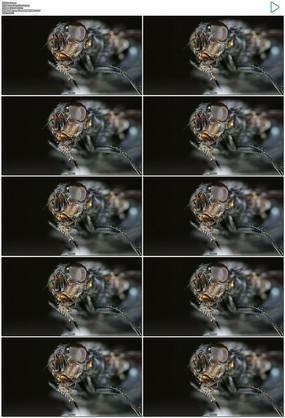 蚊子苍蝇特写实拍视频素材 mov
