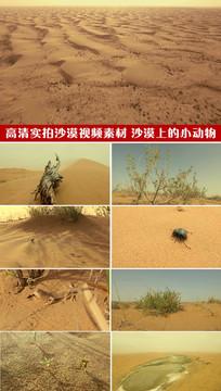 高清实拍沙漠实拍素材风沙隔壁大沙漠视频