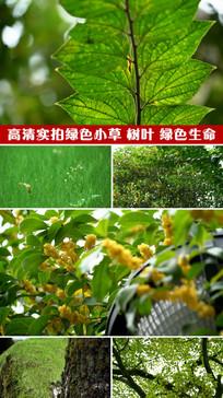 高清实拍绿色植物视频素材