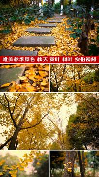 唯美秋季景色落叶大树树叶视频