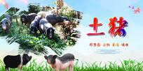 土猪养殖海报
