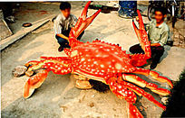 仿真大螃蟹