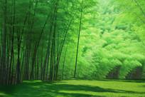 绿色竹林背景墙