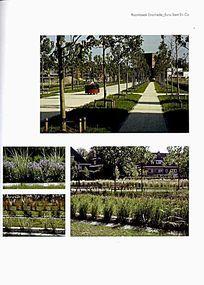 树阵广场景观意向图