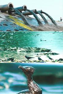 海水污染排放污水原油泄露海鸟视频 mov