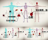 人体器官血管高清视频素材AE模版