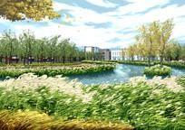 滨水芦苇丛景观