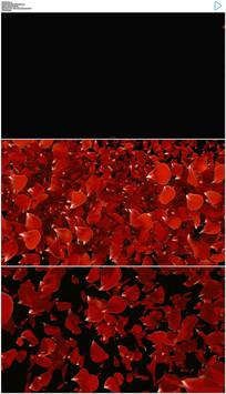 玫瑰花瓣飞舞转场动态视频带通道 mov