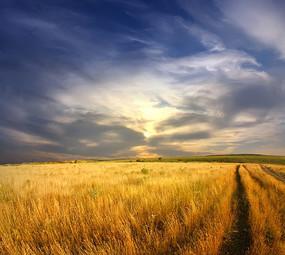 多云天气下的麦田景观