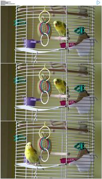 笼子里的鹦鹉实拍视频素材