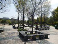 坐凳树池广场 JPG