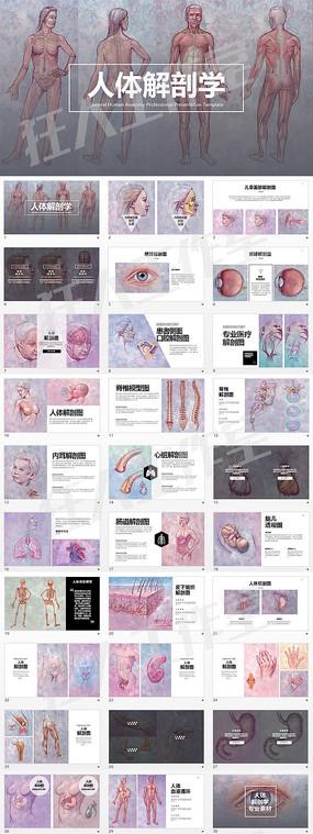 人体解剖学专业医学PPT