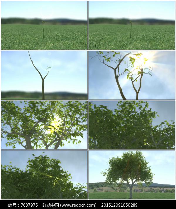 小树的简笔画图步骤