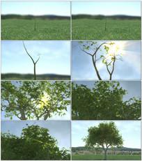 小树长成大树过程视频