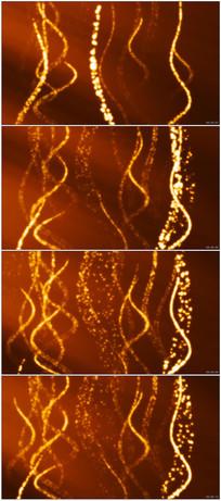 橙色背景星光闪烁视频动画素材
