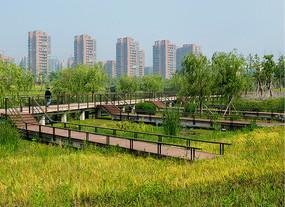 生态公园木栈道实景图