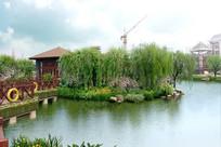 湿地植物组团景观jpg