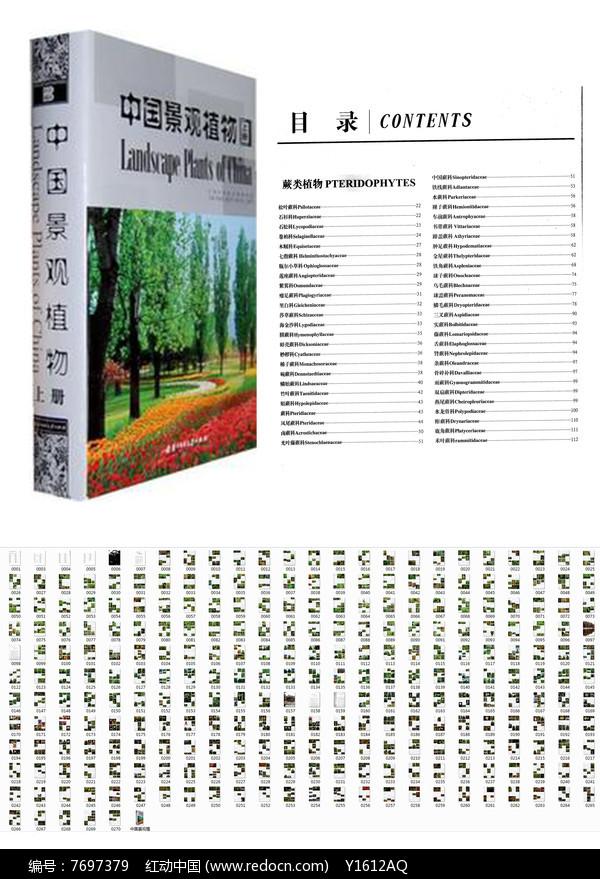 中国景观植物01图片