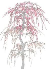 素描的桃花树效果图