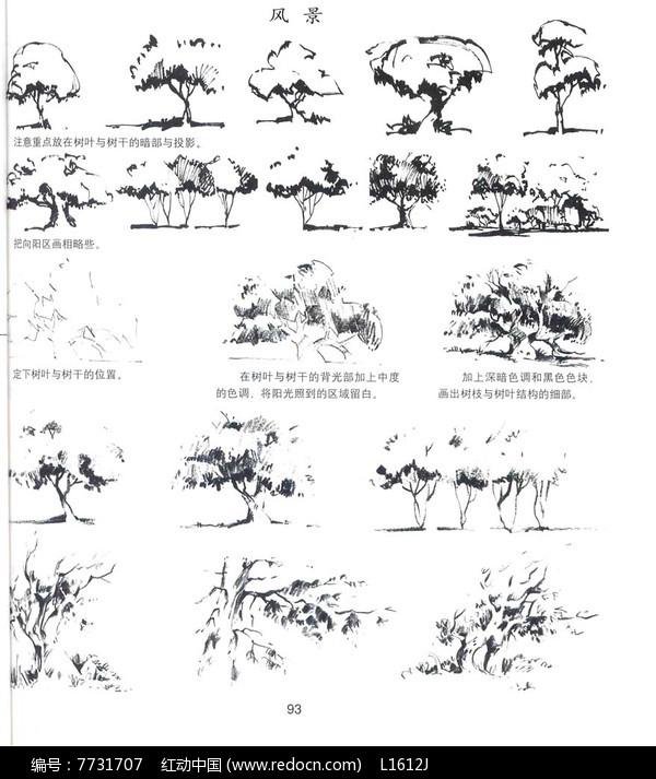 乔木素材手绘线稿图片
