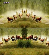 茂密的树林风光与骏马特效视频