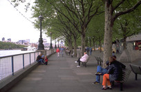 国外滨河树阵广场景观