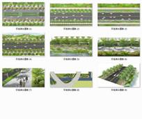 江心洲环岛滨水道路园林景观设计
