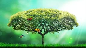 春天来了大树下蝴蝶飞舞阳光洒射视频素材