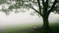 雨中孤独等待狂风骤雨视频