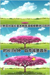 小树成长变大树阳光下蝴蝶草原蓝天视频