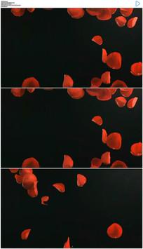 玫瑰花瓣飞舞落下实拍视频素材