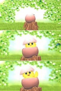 可爱小鸡仔破壳而出从鸡蛋壳里出来视频