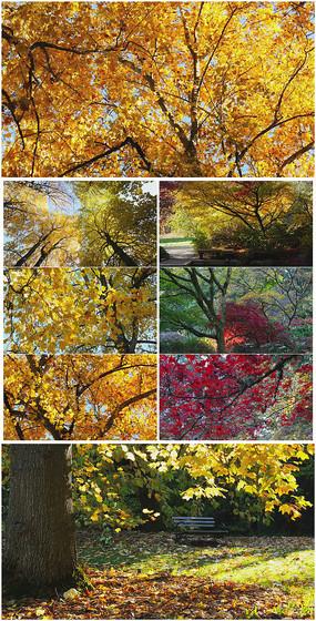 4K超清秋天黄叶落叶美景视频