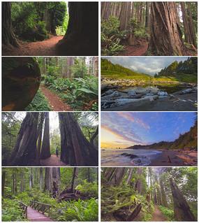 4K超清森林参天大树大自然美景视频