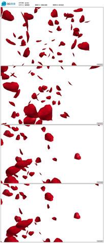 婚礼情人节红色玫瑰花瓣视频