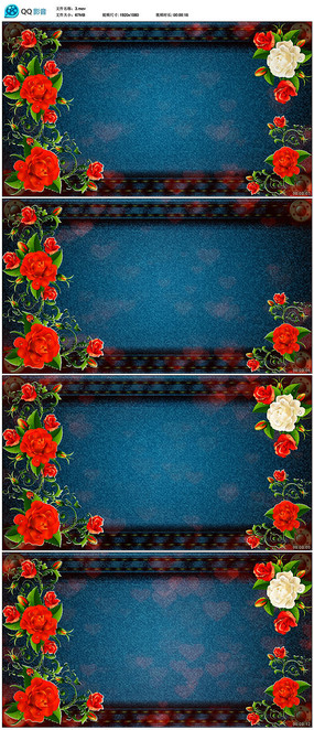 玫瑰花背景视频素材