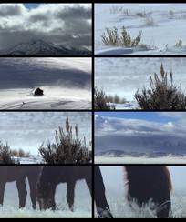 冰天雪地视频