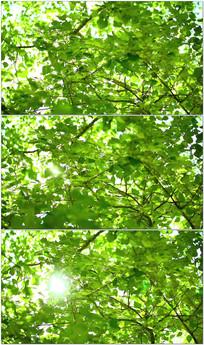 柔和阳光透过树叶视频 mov