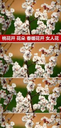 桃花朵朵开实拍桃花视频素材