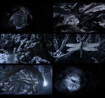 夜晚森林结冰过程实拍视频