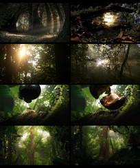 原始森林实拍视频
