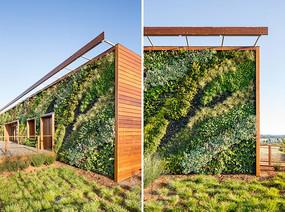 彩色植物墙景观