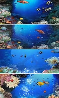 海底世界各种鱼类儿童卡通LED视频
