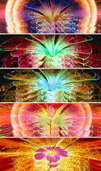三维制作水晶开放花朵唯美HD视频