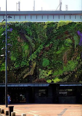 商店立面垂直绿化