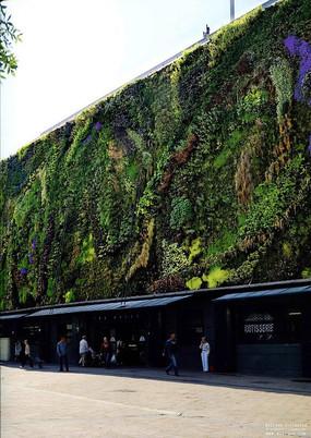 商业建筑垂直绿化景观