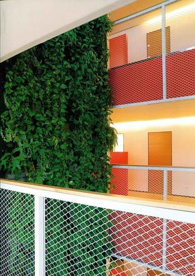 室内绿化墙