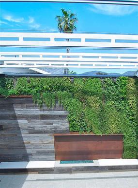 植物绿化墙面