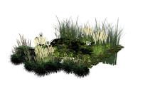 湿地植物SU组景