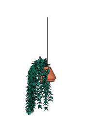 藤蔓盆栽植物SU